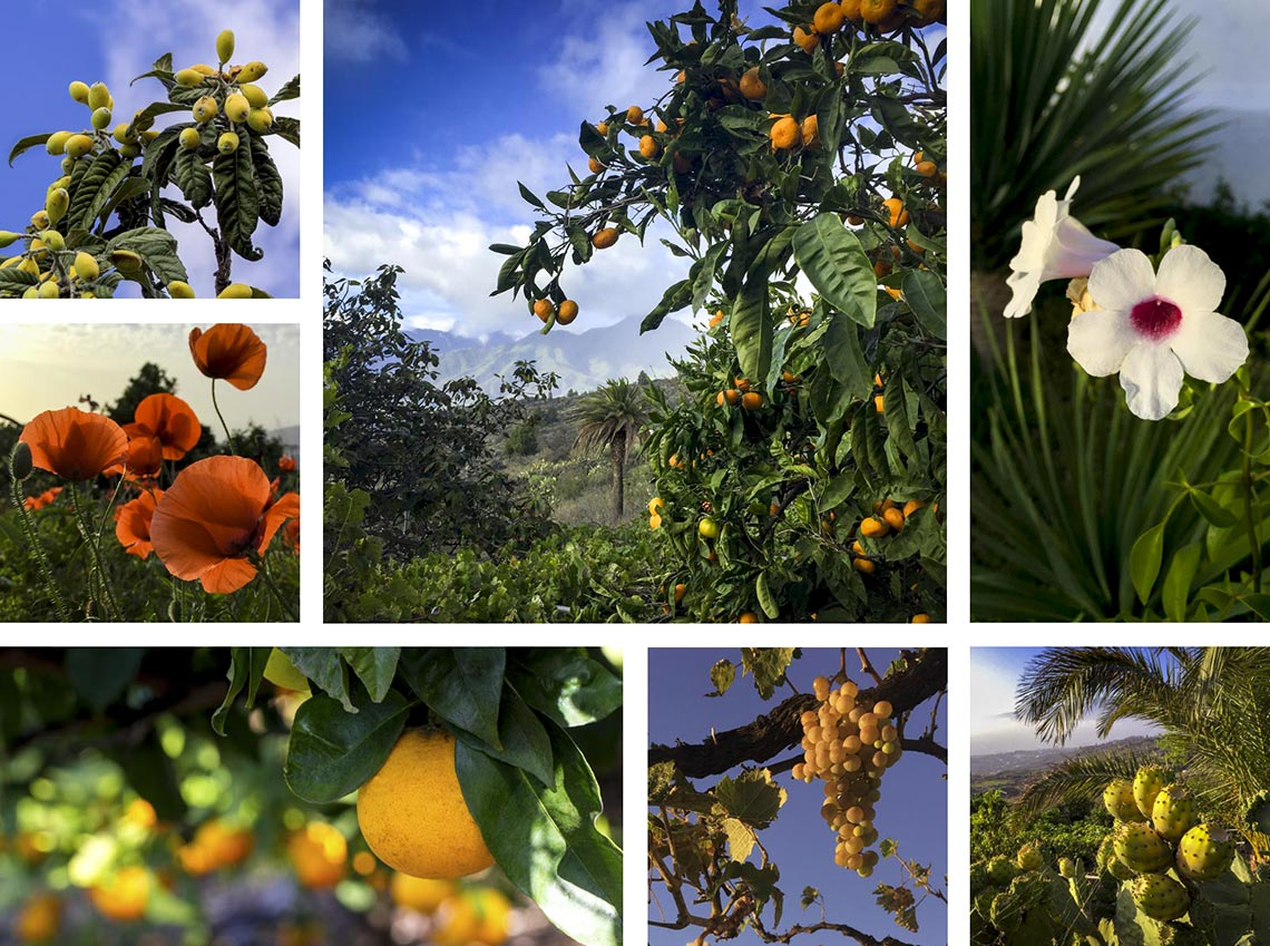 La Palma Finca Aridane Gärten