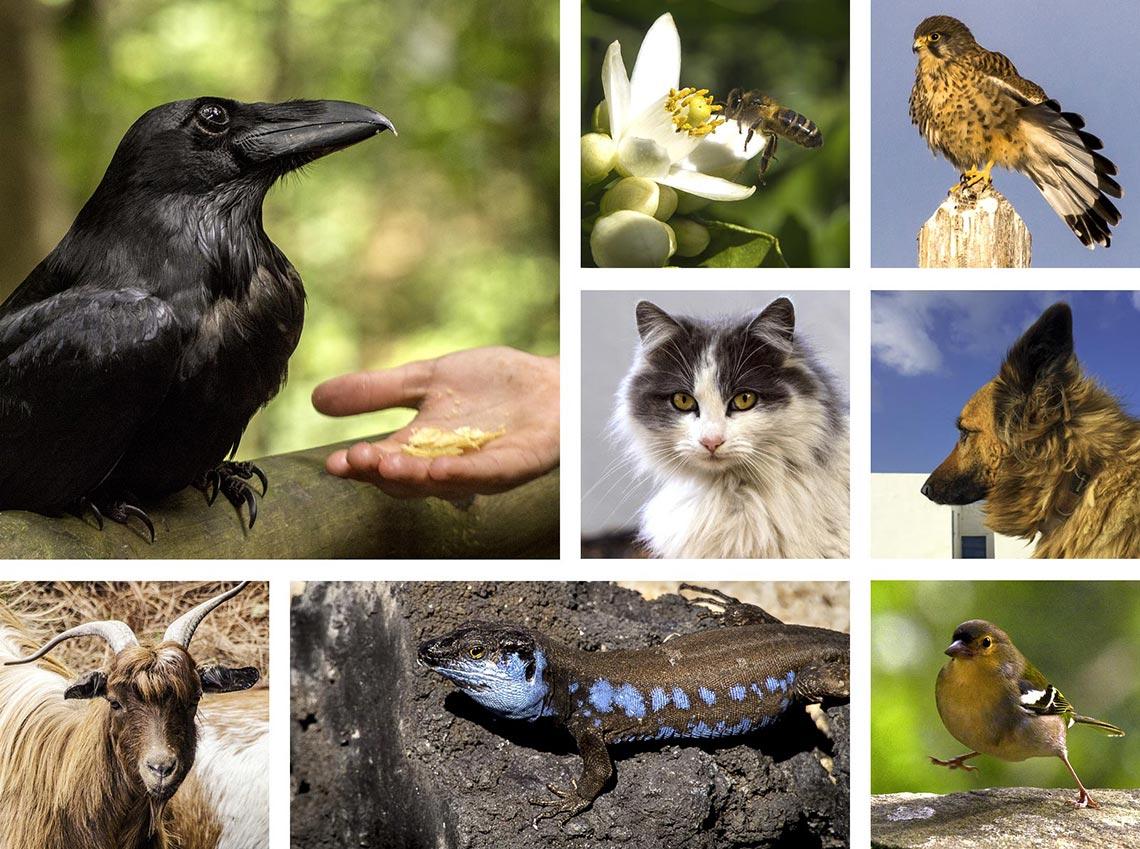 Die Tiere auf La Palma