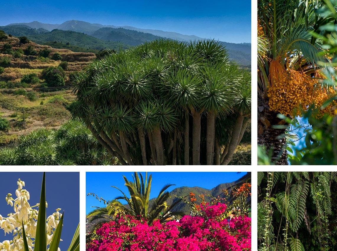 La Palma Natur